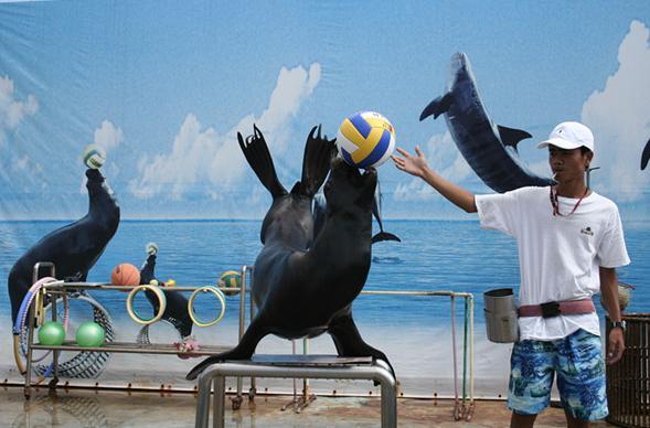 首届海洋马戏团来东莞 五一带孩子去海底世界吧