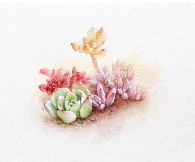 水彩手绘多肉植物,肉肉大合集 恋漫分享(水彩篇)