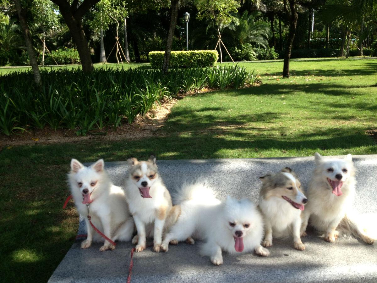 世界上最幸福的五条狗(一家子不分离)