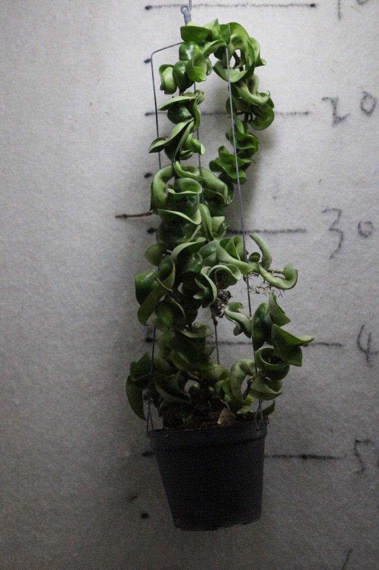 盆景 盆栽 植物 756_1136 竖版 竖屏