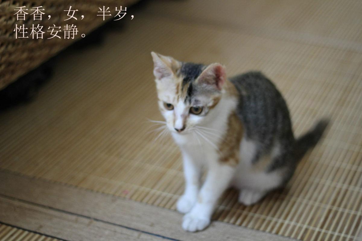 兴趣圈 宠物 > 萌娃深圳找家