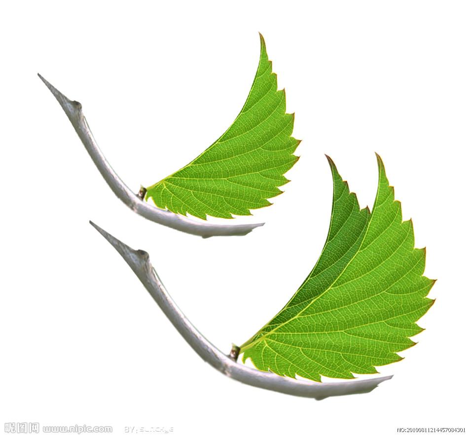 欧·亨利在他的小说《最后一片树叶》里讲了一个故事,说:有个病人躺在病床上,绝望地看着窗外一棵被秋风扫过 的萧瑟的树。他突然发现,在那树上,居然还有一片葱绿的树叶没有落。病人想,等这片树叶落了,我的生命也就 结束了。于是,他终日望着那片树叶,等待它掉落,也悄然地等待自己生命的终结。但是,那树叶竟然一直未落, 直到病人身体完全恢复了健康,那树叶依然碧如翡翠。   其实,那树上并没有树叶,树叶是一位画家画上去的,它不是真树叶,但它达到了真树叶生动真实的效果,给 了那位病人一个坚强的信念:活着,只要那片