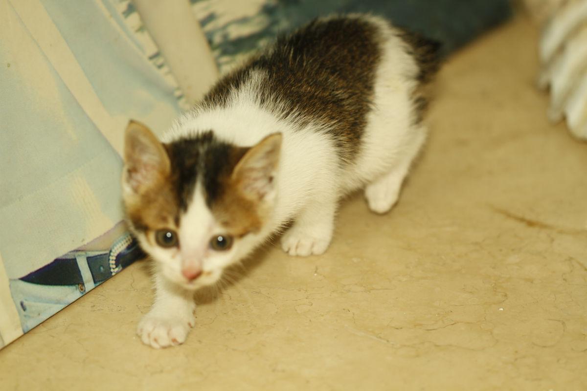 自来熟的小猫弯仔找家啦
