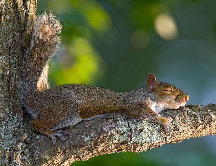 动物睡觉的姿势