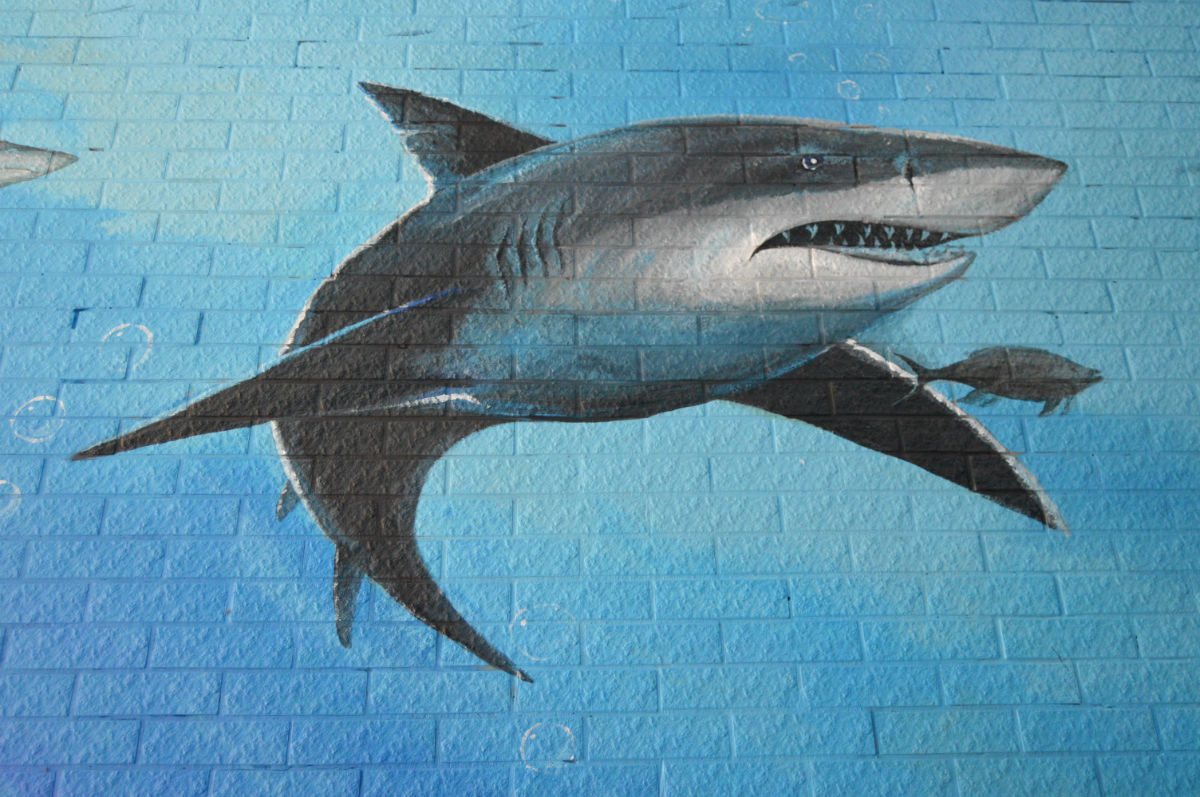 动物墙画画图片大全