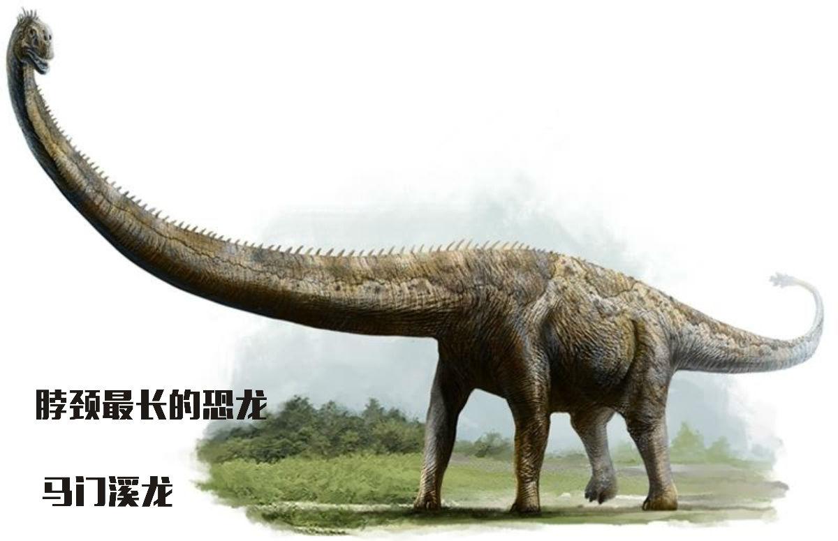 恐龙---马门溪龙马门溪龙有世界上最长的脖子,如果让它和长颈鹿比