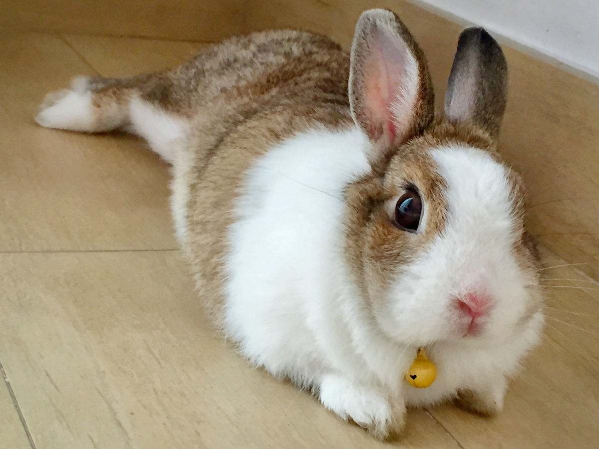 欧式刺绣图样兔子
