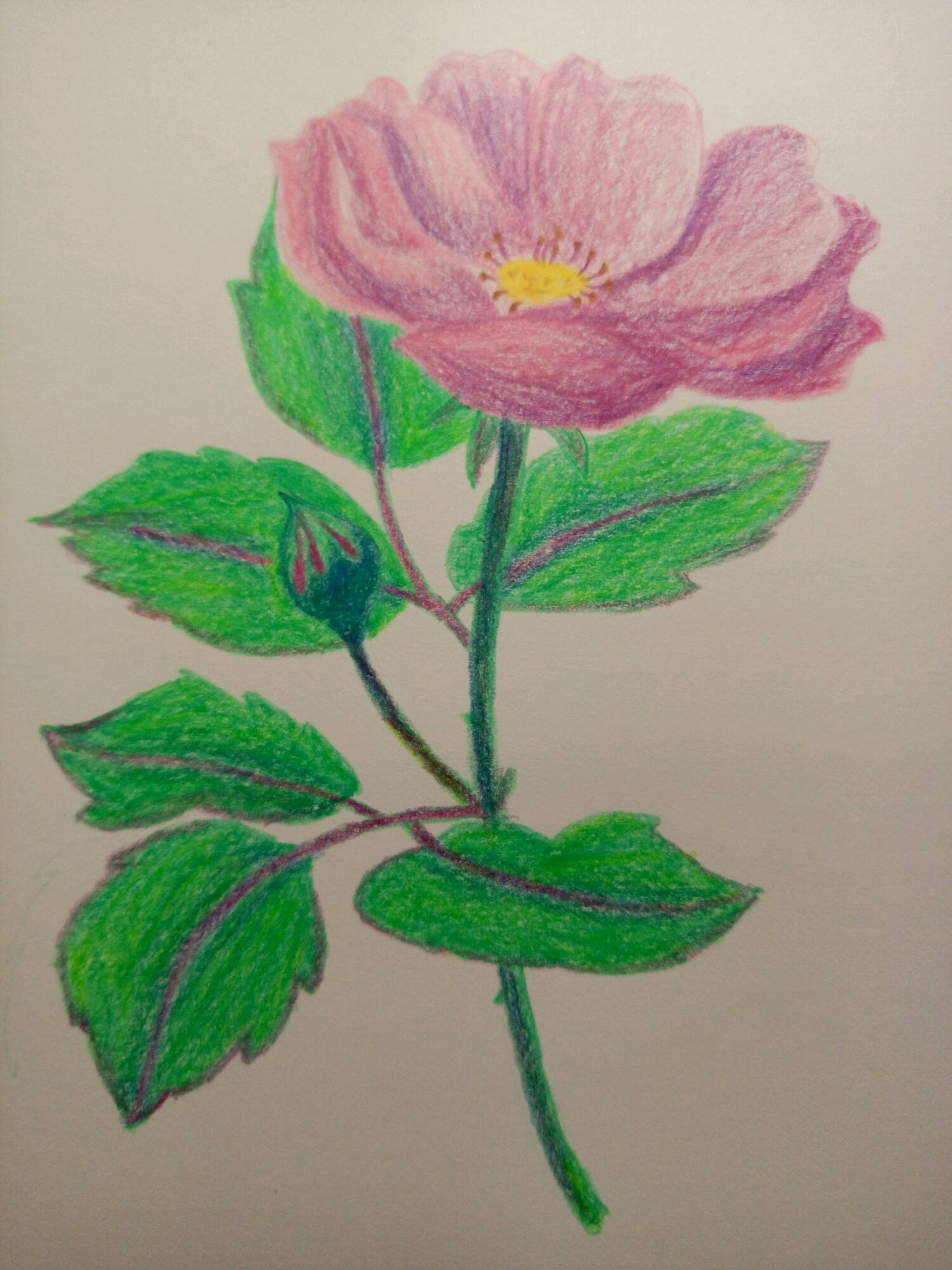 跟飞乐鸟学色铅笔手绘