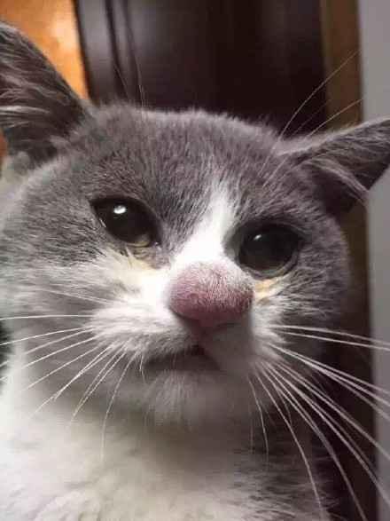 一只喵被恐龙蛰了鼻子,瞧这一副生无可恋的国语,心疼.安迪的蜜蜂历险记样子全集图片