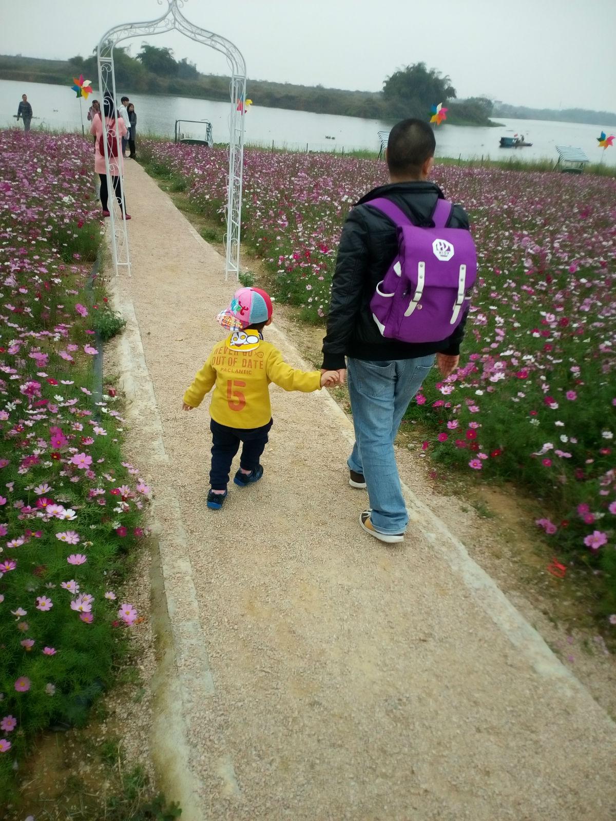 惠州紫溪半岛花海世界