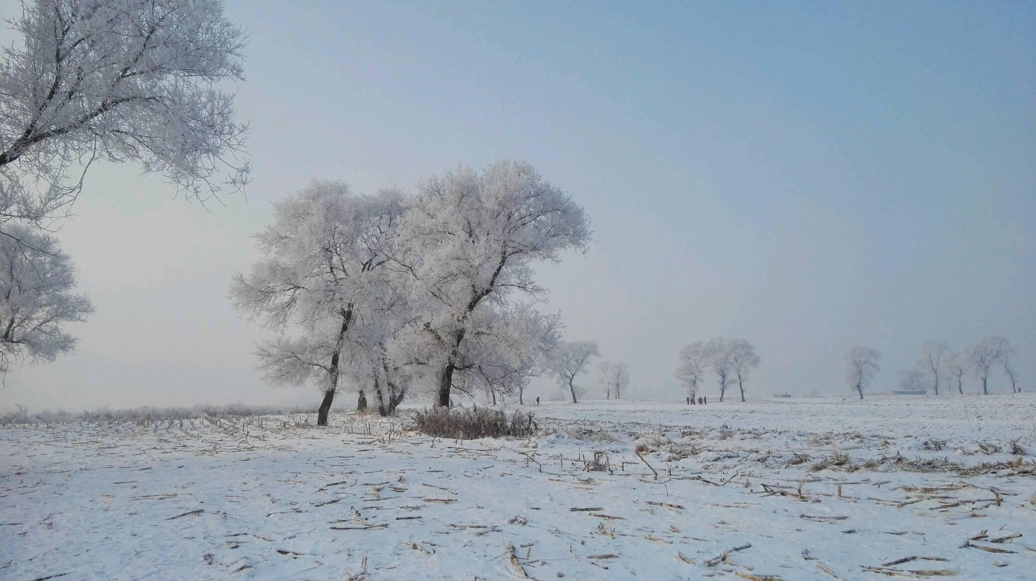 发几张吉林市雾凇岛的雾凇