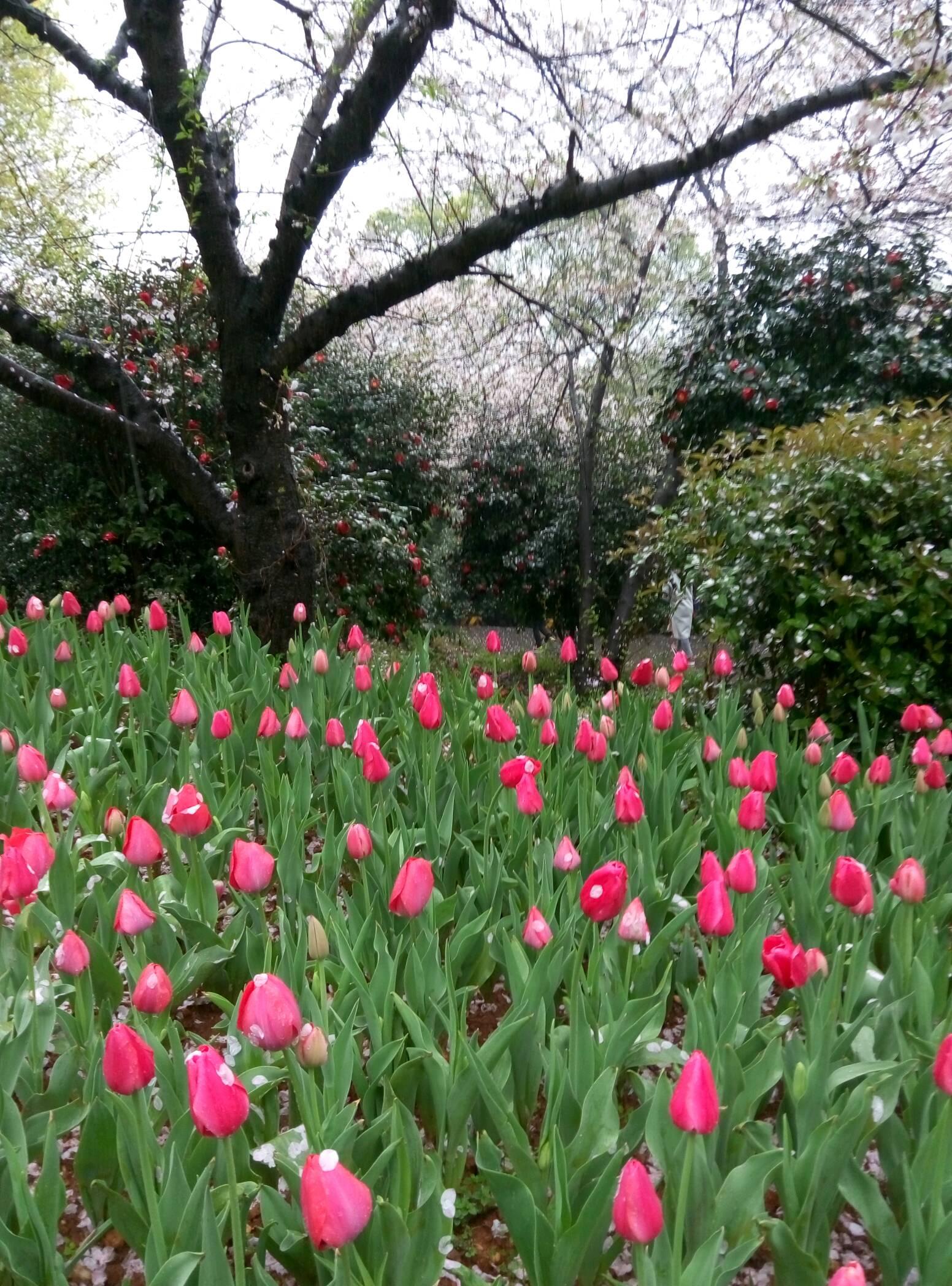 春天花儿开了,秋天谷子黄了,冬天雪花降了,长沙三季之