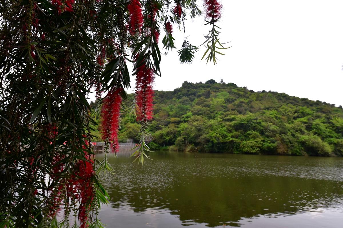 梅塘雨林溪谷穿越,寻禾雀,赏姜花!图片